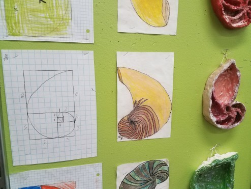 6th Grade creates nautilus drawings and sculptures based on their study of Fibonacci's number sequence
