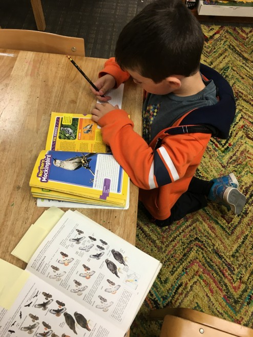 2nd Grade begins an intensive study of birds