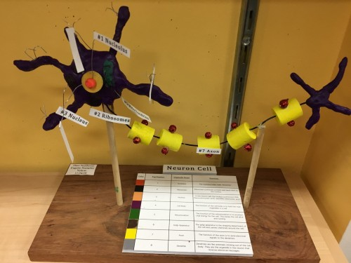Middle School Students Create Models of Cells and Atoms · San